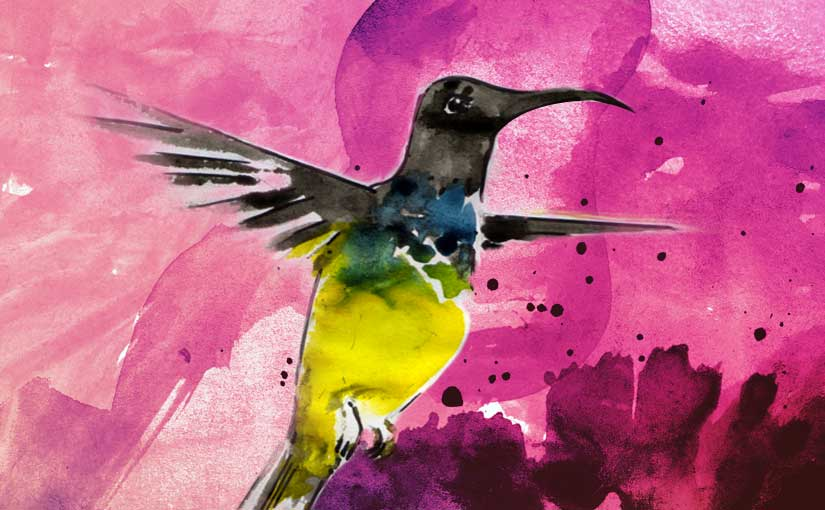 Proverbe de Bali : «Kolibri di pagi, sampai besok mimpi !»