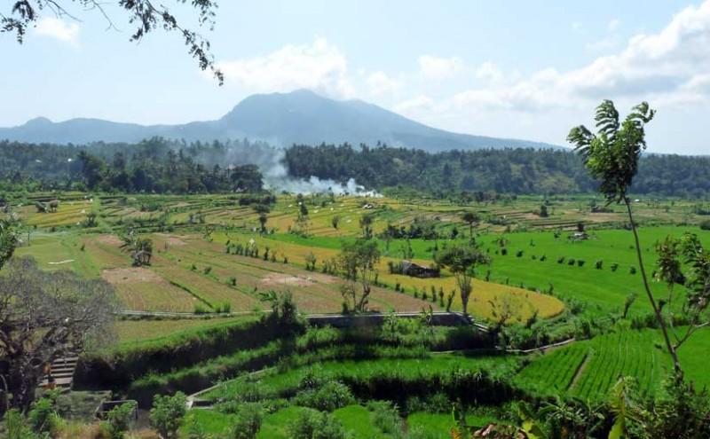 Rice fields Sidemen